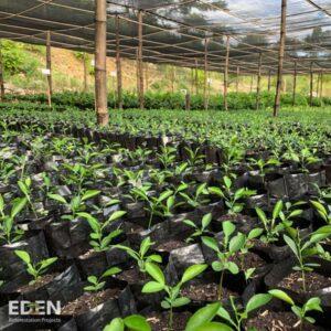Baumschule von Edenprojects