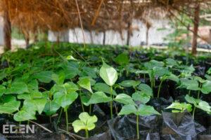 Eden-Madagascar_2012_Seedlings-in-nursery-1