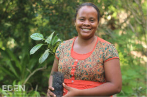 Eden-Madagaskar-Paquerette-seedling