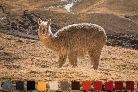 KDU-Blogbanner-De-Colores
