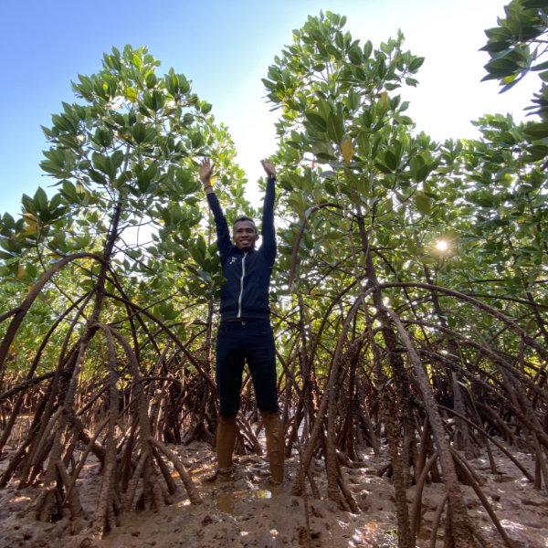 Plantage mit Mangrovenbäumen in Mosambik